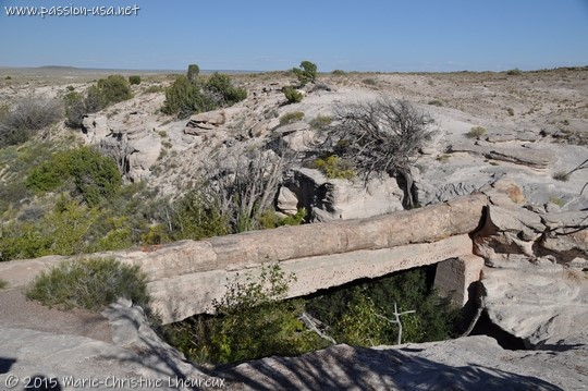 Agate Bridge, Petrified Forest National Park
