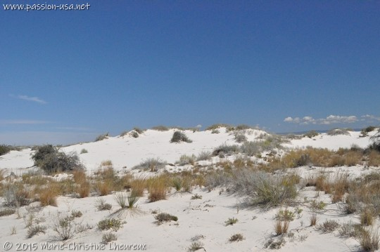 Gypsum dunes fixed by vegetation, White Sands National Monument