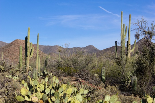 saguaro national park 540